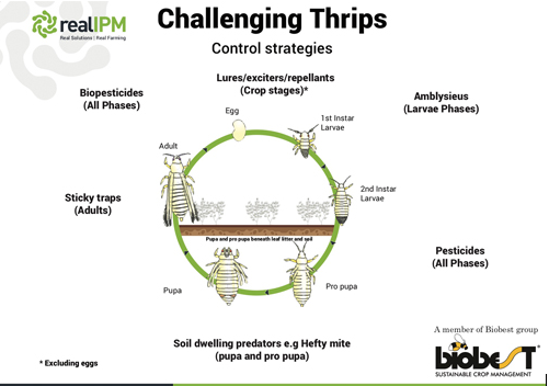 Challenging Thrips - Real IPM